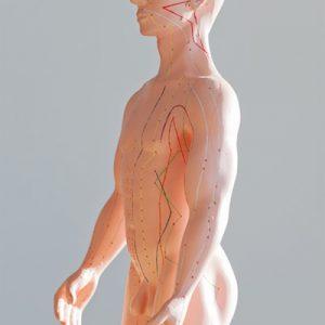 Akupunktur Meridiansystem